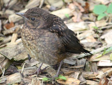Vogel Und Vogelfutterung Bund Naturschutz In Bayern E V